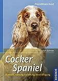 Cocker Spaniel: Auswahl, Haltung, Erziehung, Beschäftigung